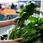 greens_farmers_market_1